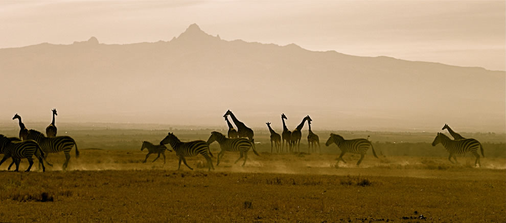 Mount Kenya National Park wildlife at dawn, Mount Kenya in background