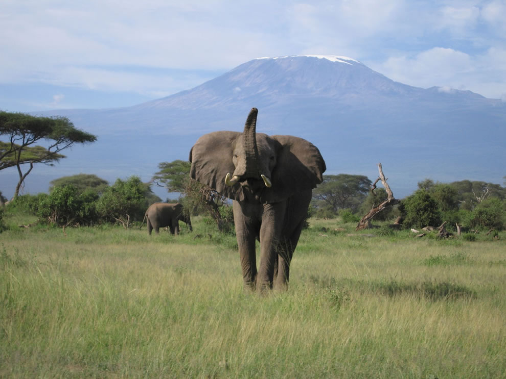 Mount Kilimanjaro and elephant, Kilimanjaro National Park