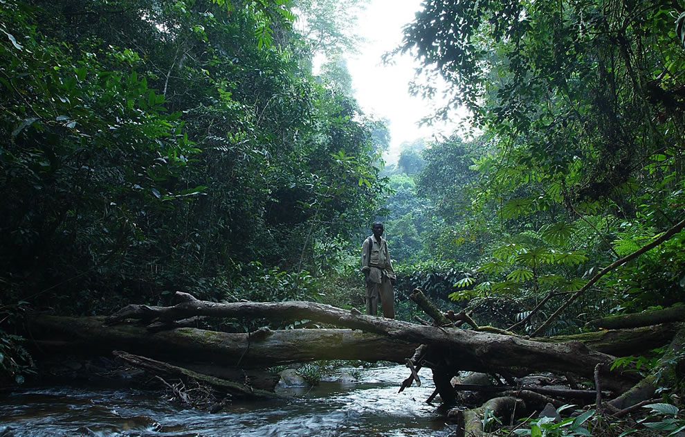 Mount Nimba Strict Nature Reserve