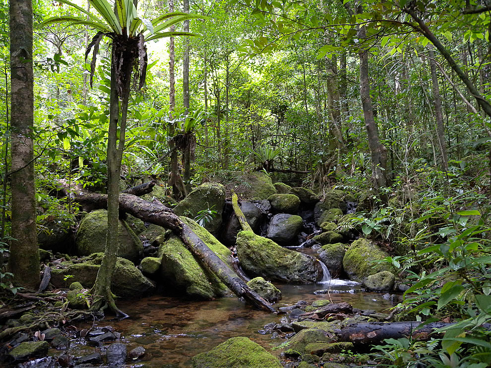 Rainforests of the Atsinanana, Madagascar