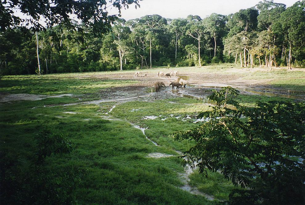 Sangha Trinational, Africa, UNESCO World Heritage Site since 2012