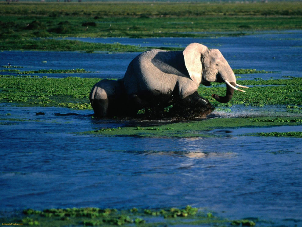 Taï National Park, in West Africa, World Heritage Site since 1982 due to flora and fauna diversity
