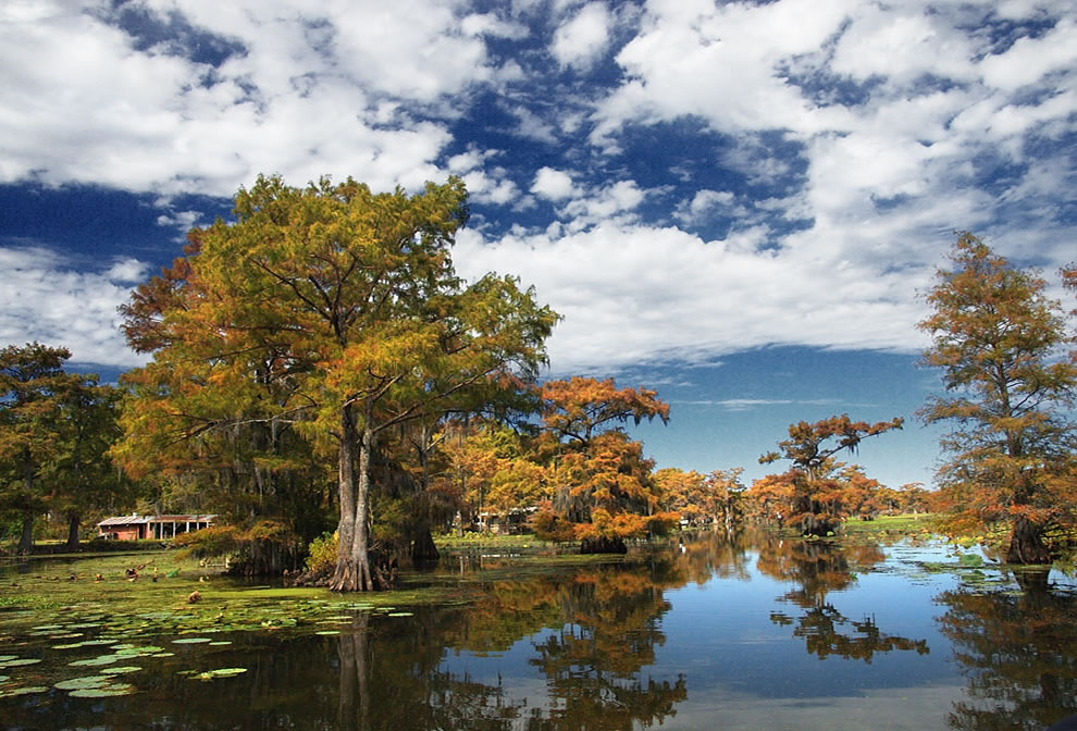 Autumn at Uncertain, Texas, fall foliage at Caddo Lake