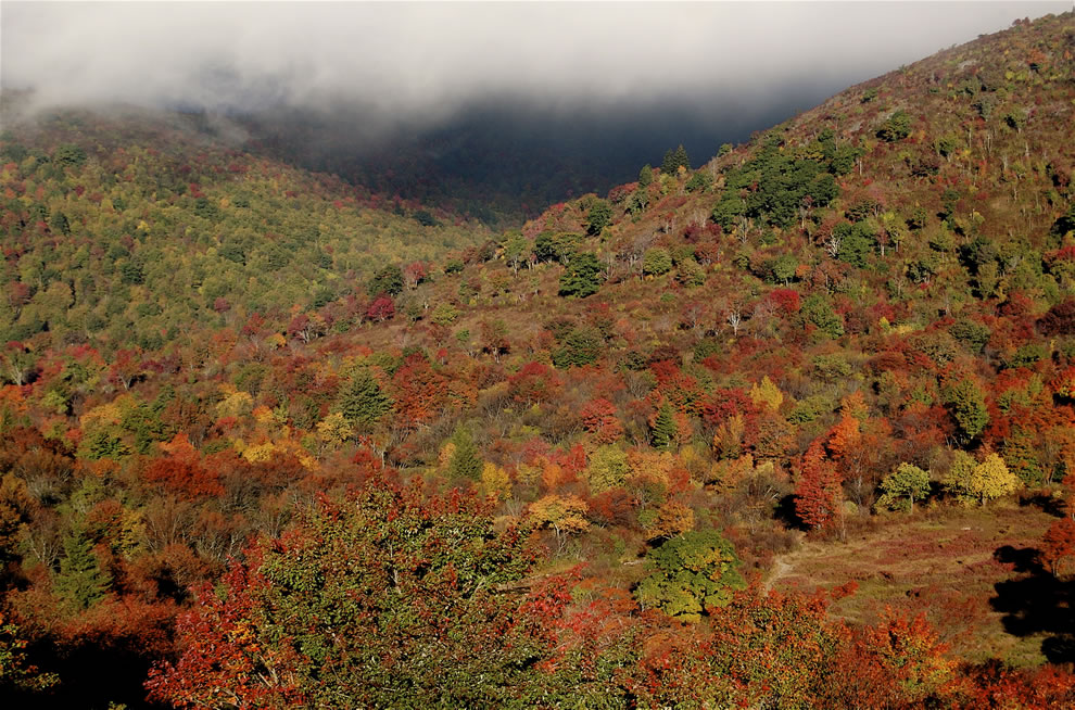 Autumn in North Carolina, Graveyard Fields from Blue Ridge Parkway