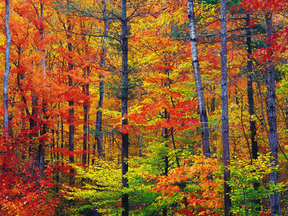 Bright fall foliage, autumn in New Hampshire