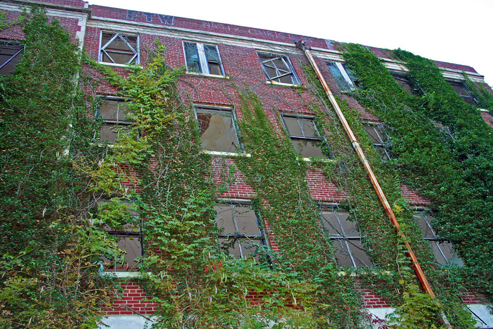 Green climbing up and into the building, Waverly Hills Sanatorium