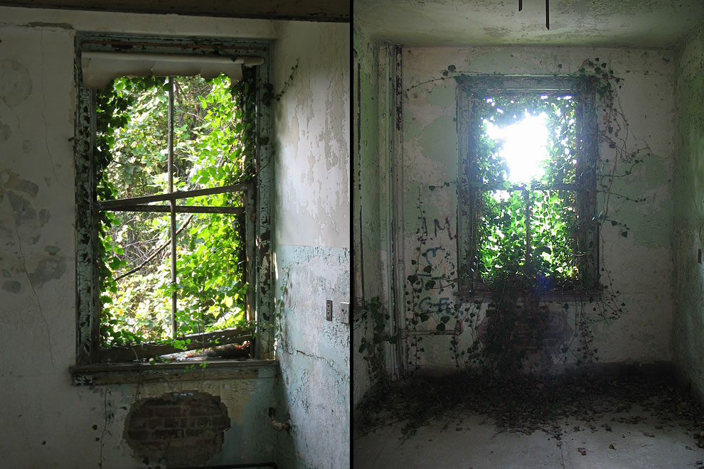 Nature climbing in through the windows at Waverly Hills