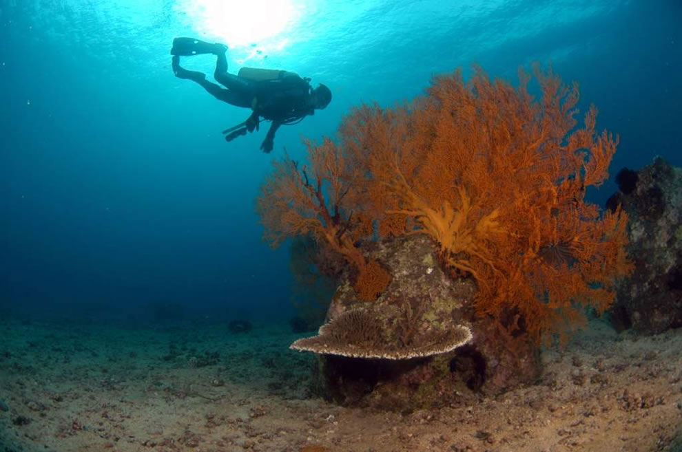Reef Ball artificial reef with diver