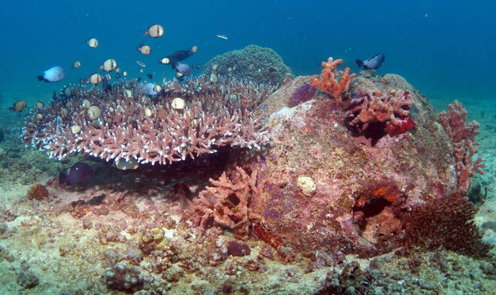 Reef balls come in over 20 styles with varying sizes to rehabilitate a coral reef