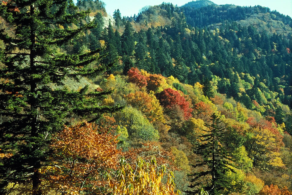 Autumn leaf colors at Newfound Gap, Great Smoky Mountains National