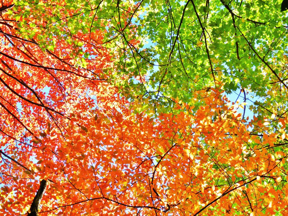 Autumn leaves Applachian Trail, Smoky Mountains
