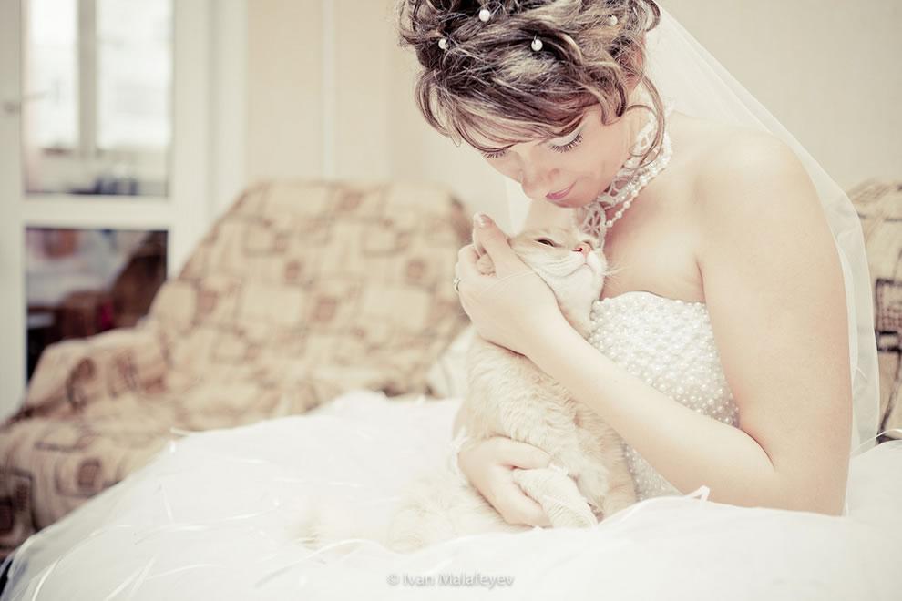 Cat with bride