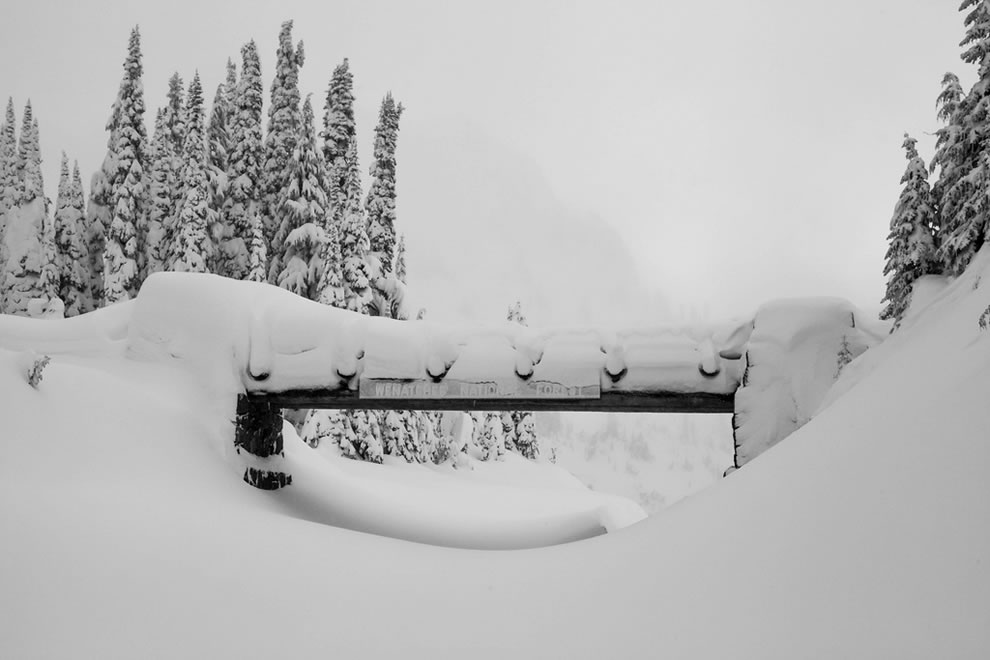 Chinook Pass, Wenatchee National Forest