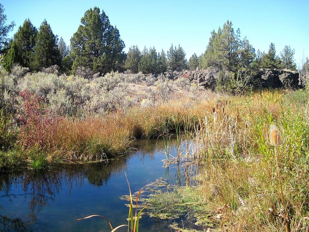 Creek at Crooked River National Grassland