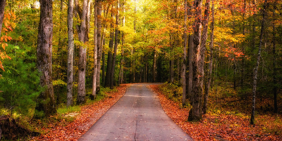 Fall Road Glow, Cades Cove, Great Smoky Mountains National Park