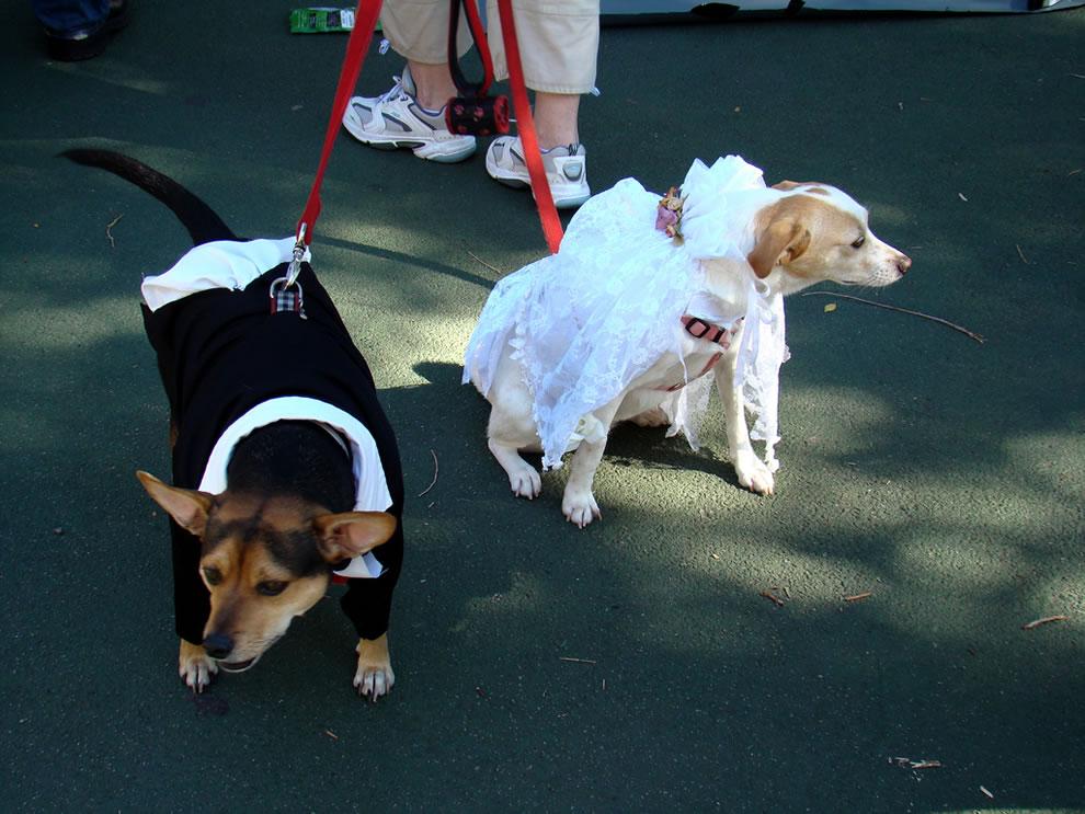 Happy dog couple