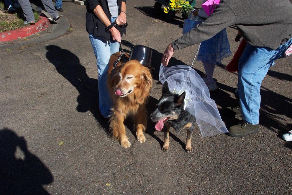Jules & Luna bride and groom