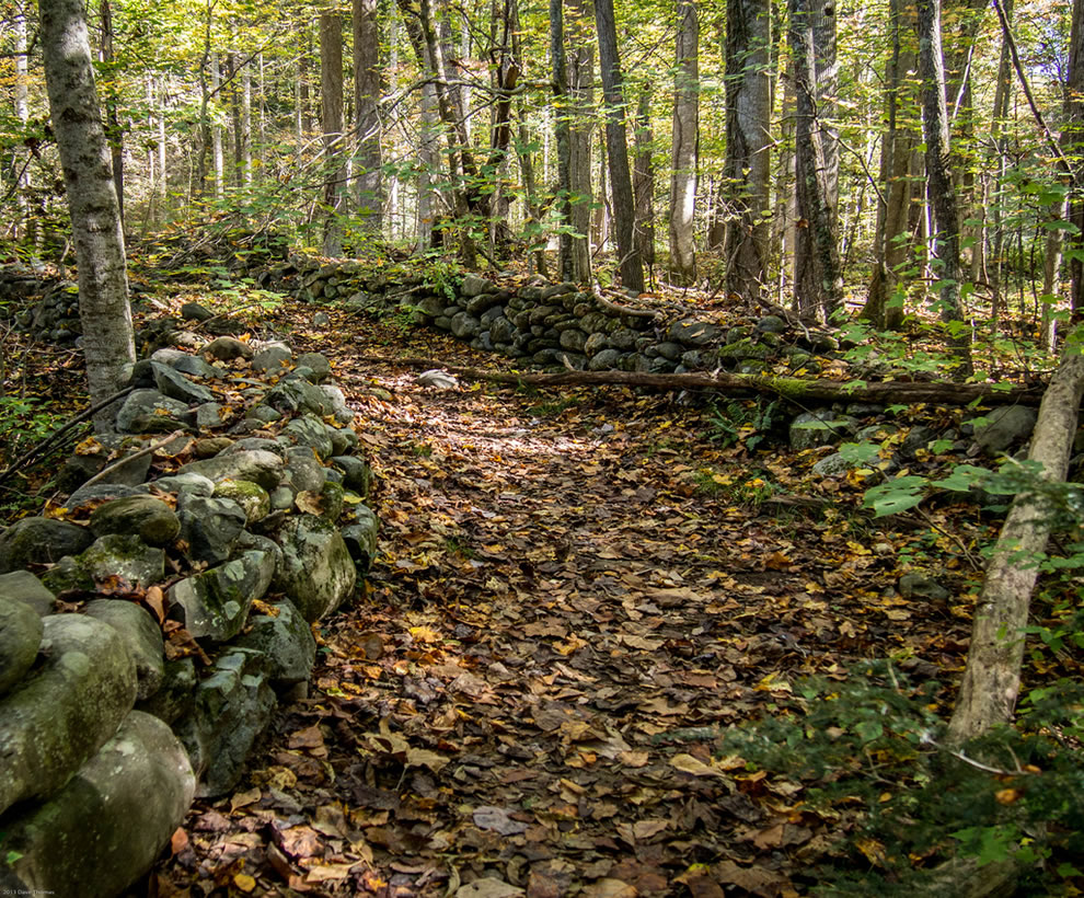 Path to the past, abandoned cabin in Elkmont Great Smoky Mountains