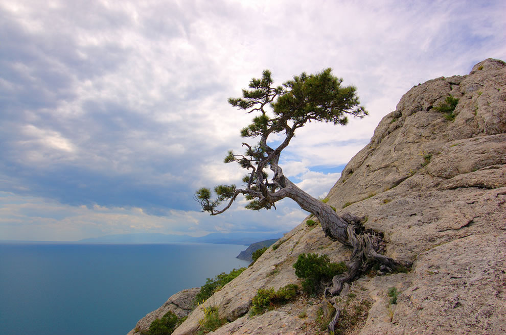 Black Sea and tree growing on the rocks of the Crimean Mountains