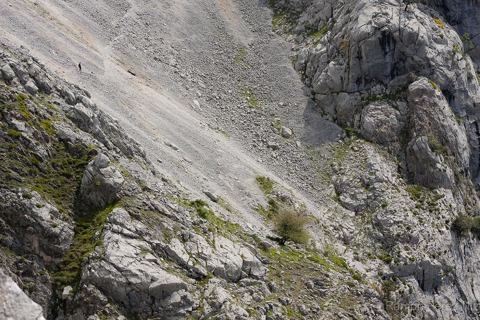 Lone hiker on the route of the Cares, Picos de Europa