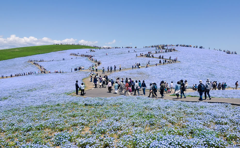 People walk the paths of Hitachi Seaside Park