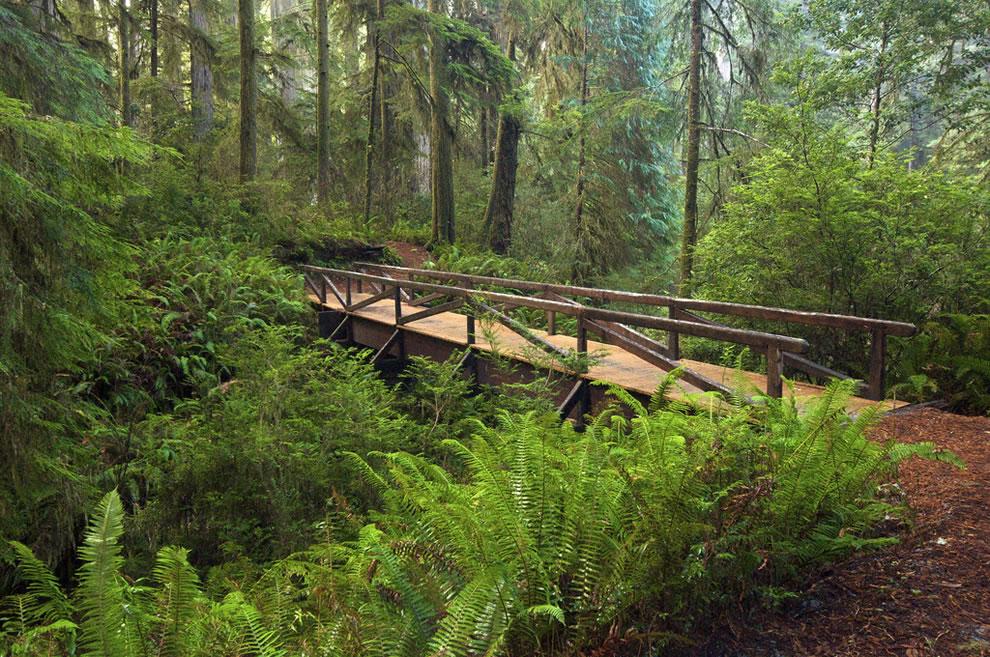 Redwood National Park footbridge, ferns redwoods