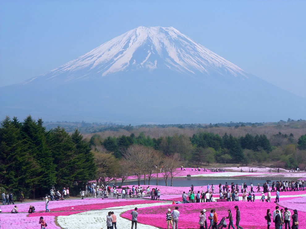 Spring in Japan, flowers and Mount Fugi