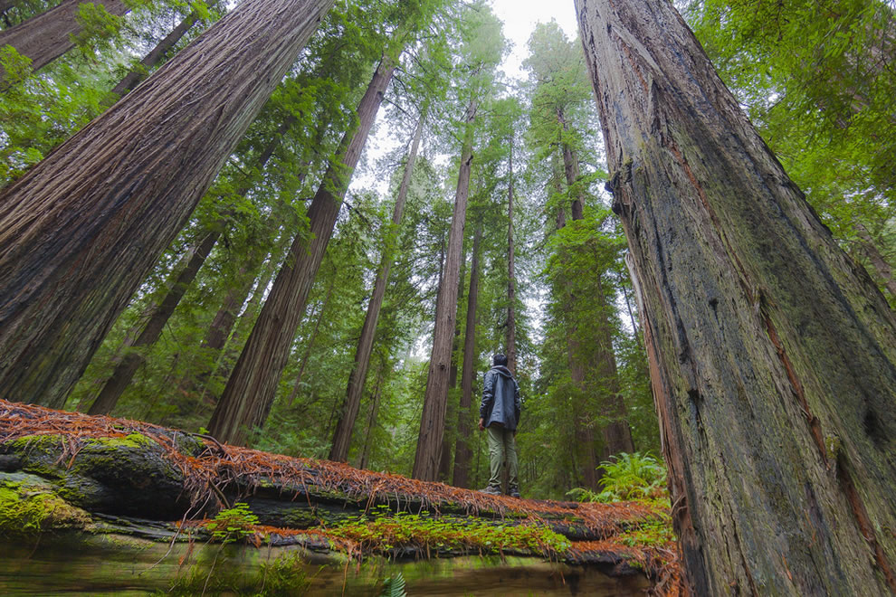 The Unexplored adventure in the Redwoods
