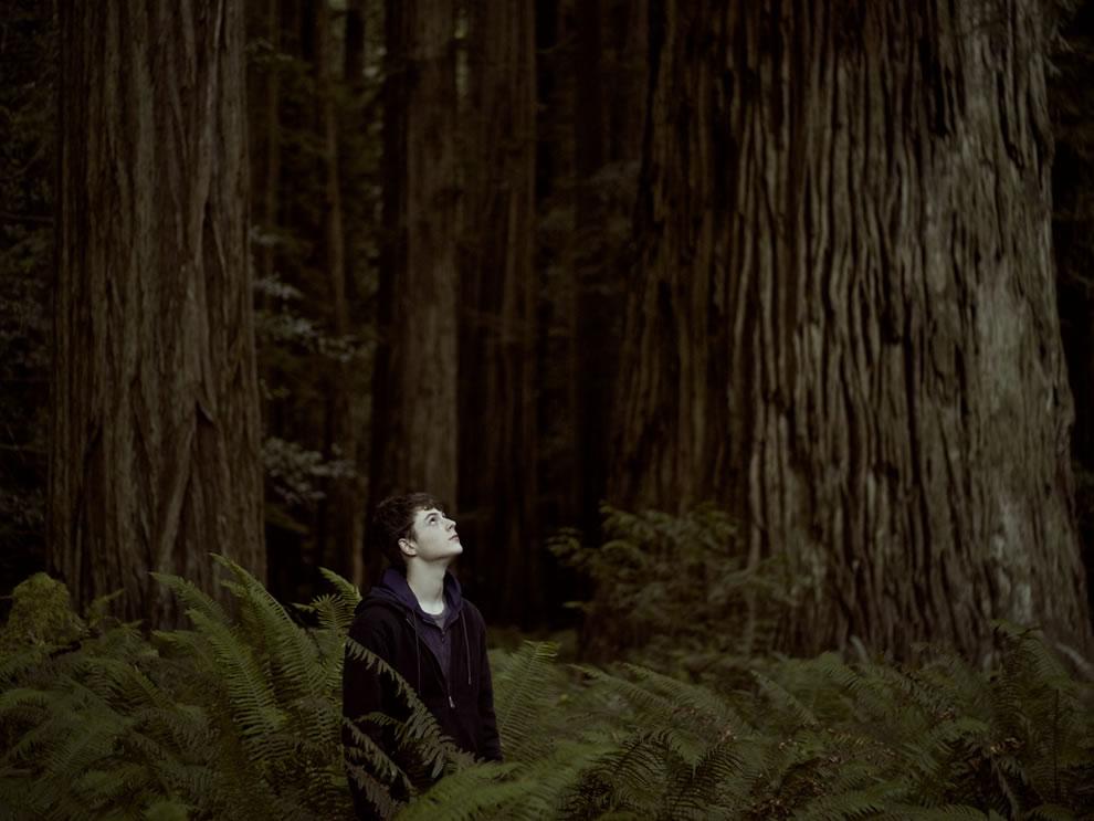 Among the giants, Redwood National Park