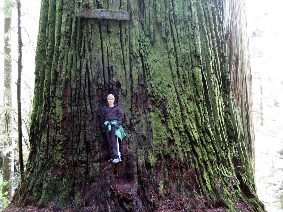 Boy Scout Tree