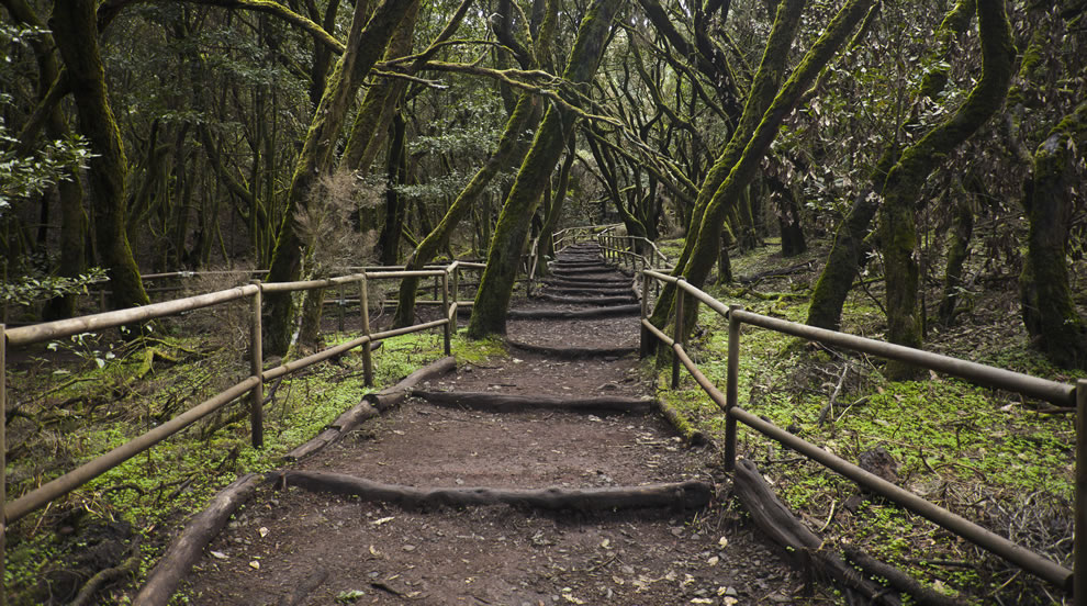 Enchanted Forest, Garajonay National Park, La Gomera, Spain