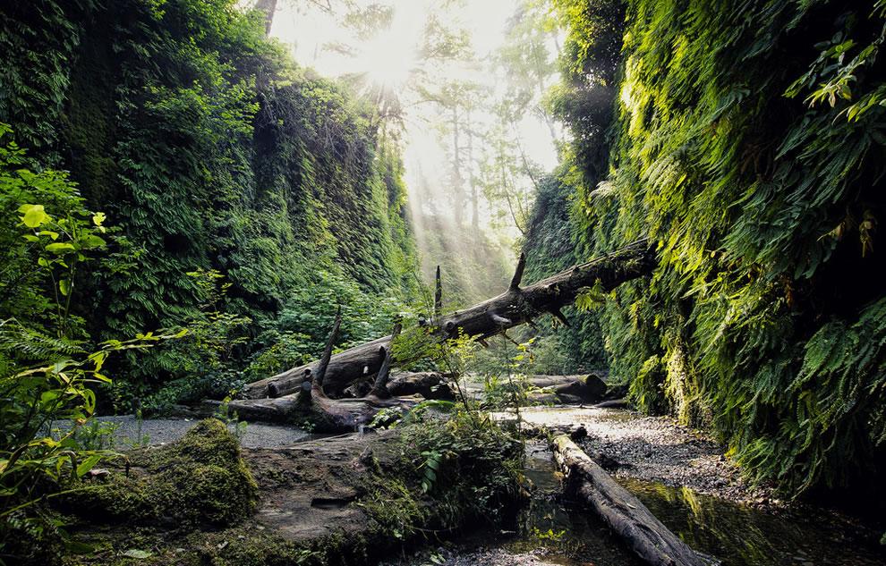 Hiking Fern Canyon, California Coast Redwoods