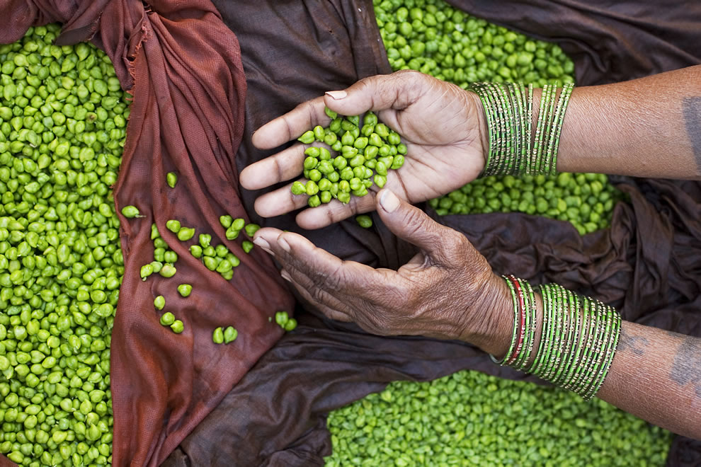 Indian streetseller hands displaying green chickpeas, 10th place photo winner