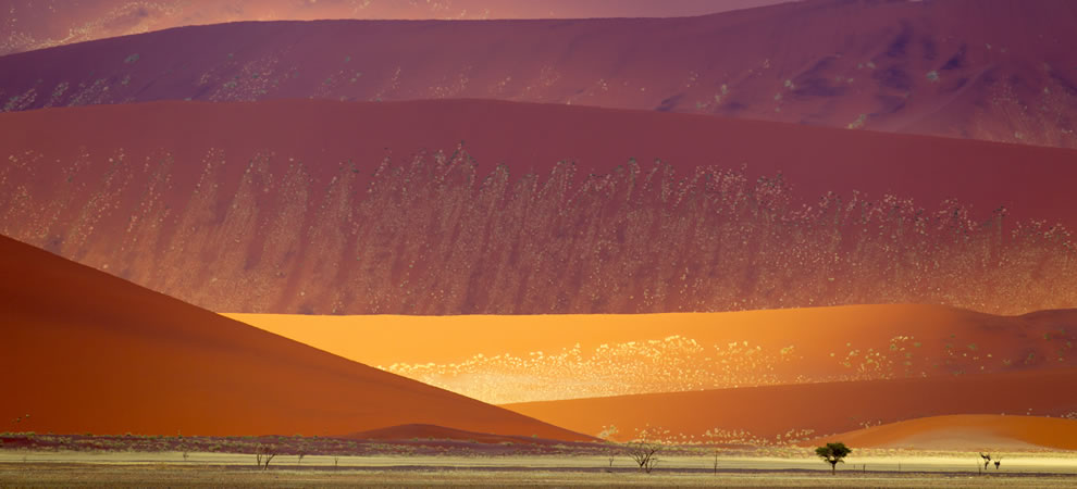 Sand dunes in the Namib-Naukluft National Park, Namibia
