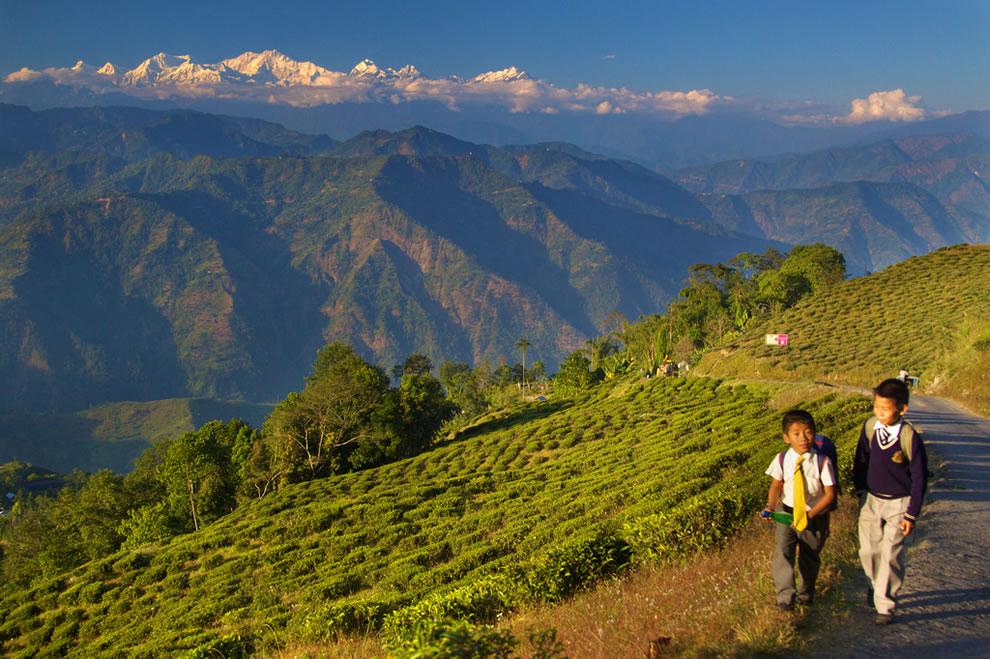 Living on Mountains of Tea in Darjeeling, India