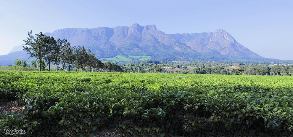 Mulanje Mountain, Malawi from tea plantation