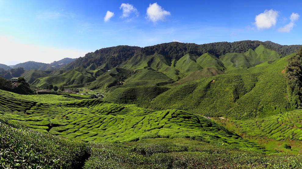 The Bharat Tea Plantation near Tanah Rata in the Cameron Highlands, Malaysia
