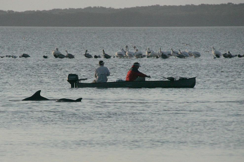 Dolphin Florida Bay, Everglades NP