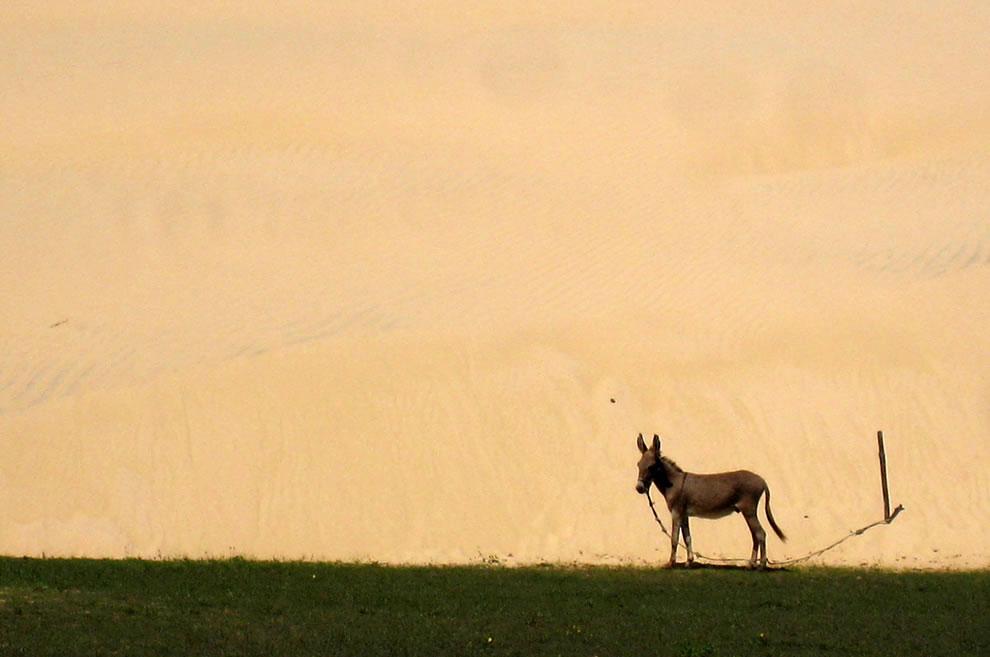 Donkey on the edge of Lencois Maranhenses