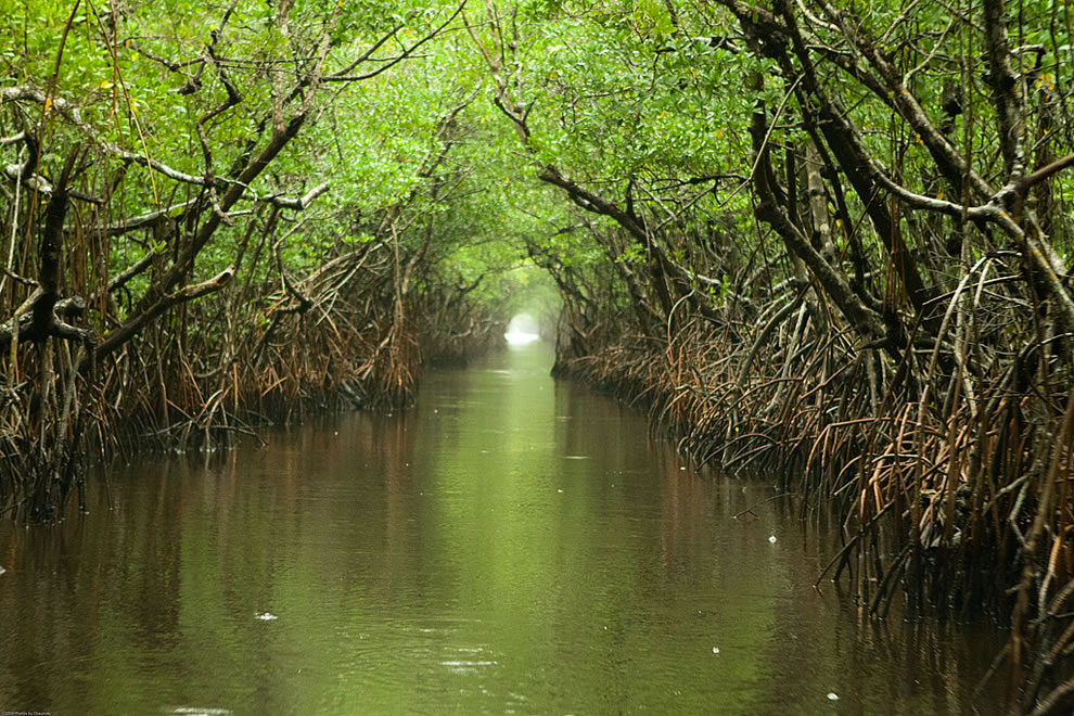 Everglades water way on a rainy afternoon