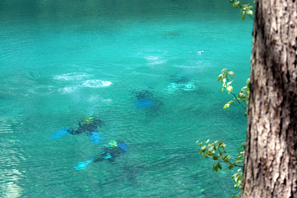 Green Lake divers in May