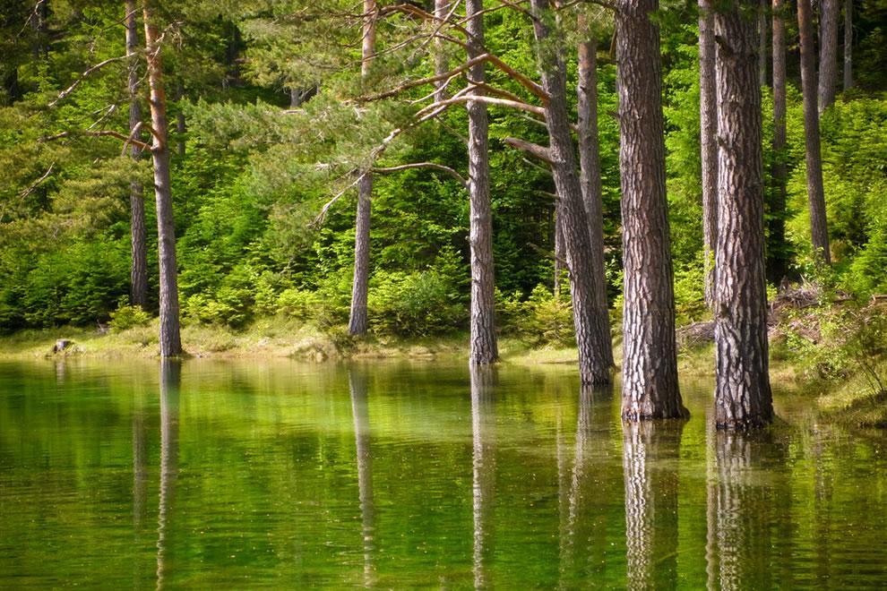 Very green Green Lake