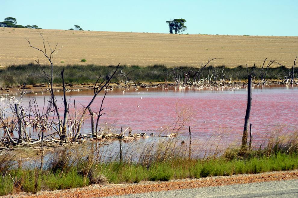 Pink Lake near Quairading Western Australia
