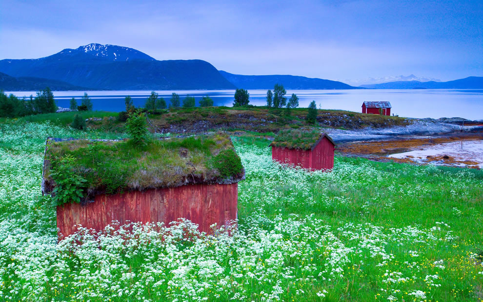 Grass roofs on wooden houses in Tysfjord, Norway