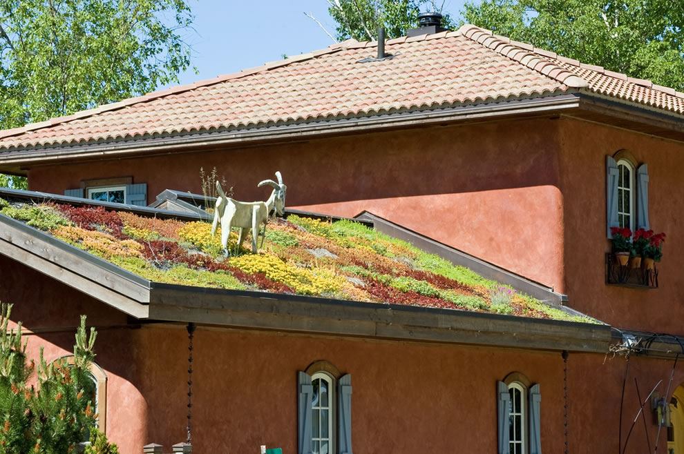Real living roof but not real goat in Michigan