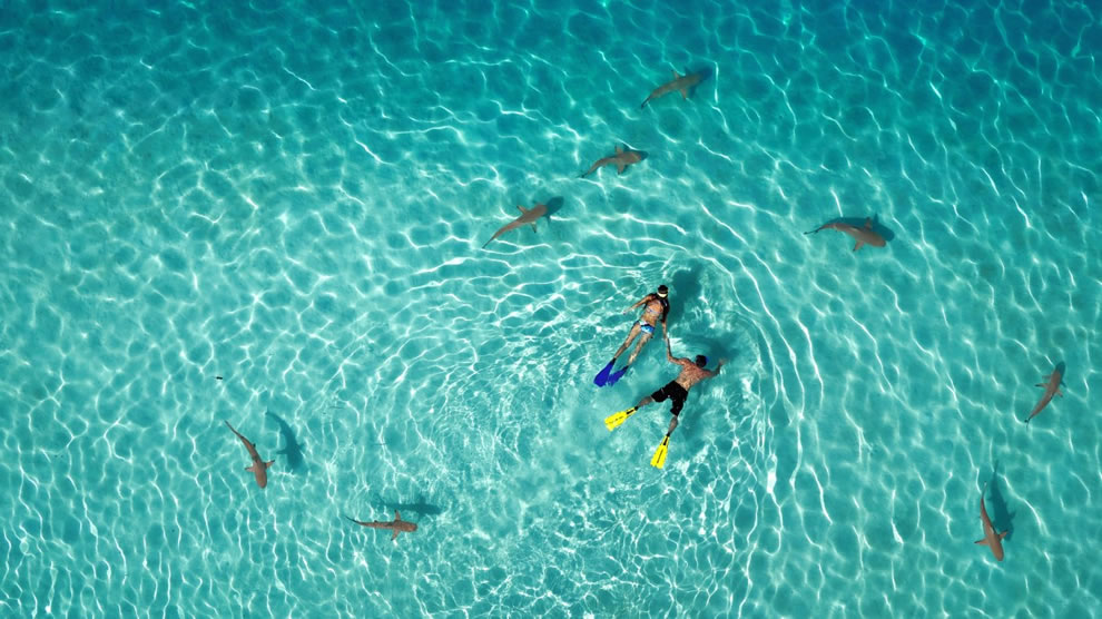 Dronestagram first place winner in Category Nature Snorkeling with sharks