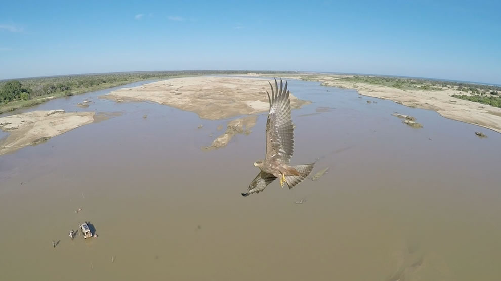Soaring with a bird over the Maharivo river in Madagascar
